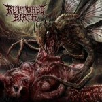 ruptured-birth-coverart